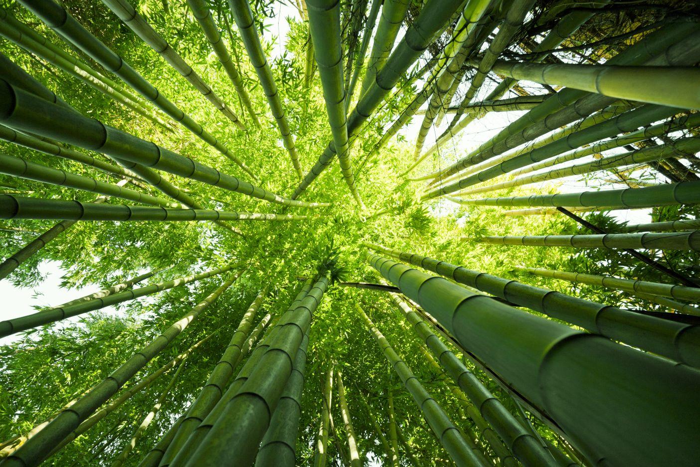 Bambus i prirodna rafija